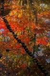 流れゆく秋彩