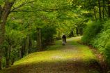 秋への小路