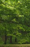 オジサンの散歩道;緑2