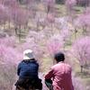 春陽の告白