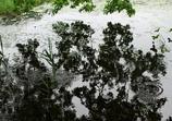 梅雨のリズム