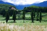 高原のそば畑
