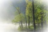 朝霧のほとり