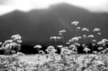 秋蕎麦の夢