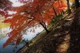 木漏れ日の小径
