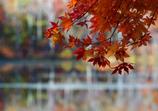 秋のかげり