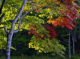 秋のいろは