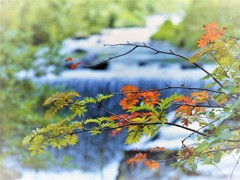 秋のはしり