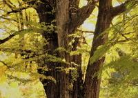 OLYMPUS E-M5で撮影した(溢れる光の中で)の写真(画像)
