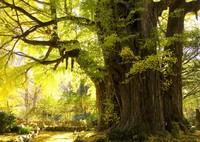 OLYMPUS E-M5で撮影した(神の秋)の写真(画像)