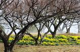 春モドキ!