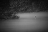 霧の案内人