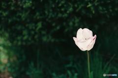 一輪の咲く花