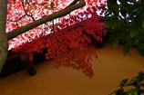 茶室を飾る紅