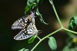 蝶達の熱い夏