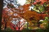 晩秋の寺院