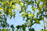 若葉の季節