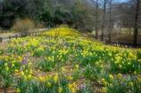 春の香りがいっぱい!