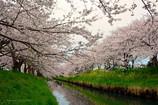 水面を彩る満開の春