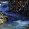 落ち葉舞う渓流