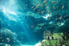 光の水族館