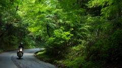 緑さす、裏箱根の旧道へ。
