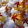 落ち葉の雪舞台