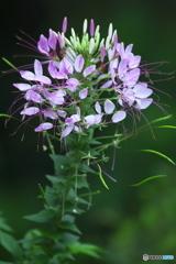 知人の庭の花 Ⅱ