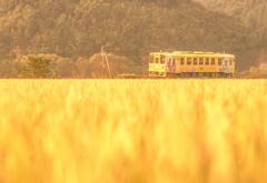 ~ Yellow days 黄色の日々 ~
