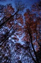 晩秋のころ