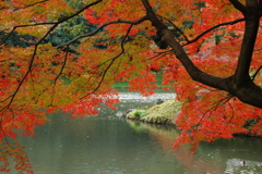 庭園の秋景色