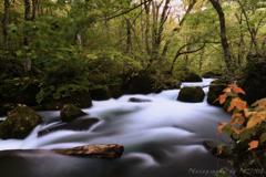 奥入瀬渓流秋の訪れ