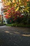 秋の終わりー1