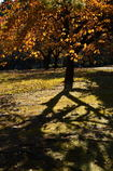 秋の影ー1
