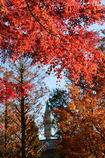 記憶の秋ー1