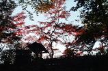 秋の終わりー2