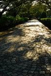 秋の路-1
