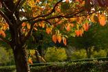 今は秋ー1