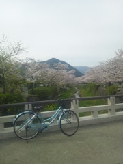 クレパス号と桜