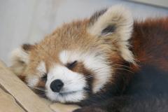 ハルマキの寝顔