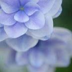 NIKON NIKON D90で撮影した(手柄山温室植物園)の写真(画像)