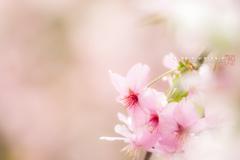 春を愛でる