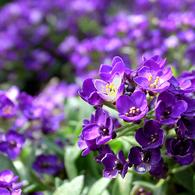 RICOH GR Digitalで撮影した植物(花)の写真(画像)