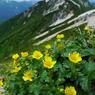 PANASONIC DMC-LX3で撮影した植物(花と燕岳)の写真(画像)