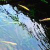 湧水と虹マス