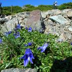 RICOH GR Digitalで撮影した植物(山の精)の写真(画像)