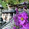 RICOH GR Digitalで撮影した植物(花と山寺)の写真(画像)