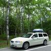 車と白樺林