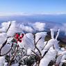 RICOH GR Digitalで撮影した植物(霧氷と果実)の写真(画像)
