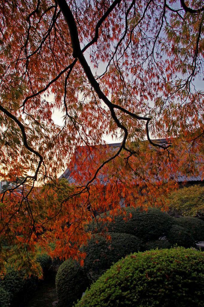 秋の夕日に